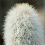 cactus 013