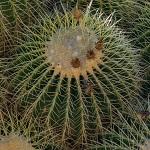 cactus 014