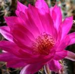 cactus 018