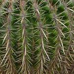 cactus 019