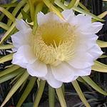 cactus 020