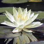Fleur mer 006