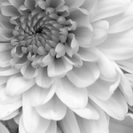 Fleur rupture 001