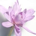 Fleur rupture 002