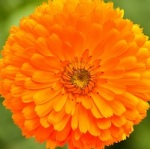 Fleur rupture 005