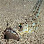 Les animaux marins les plus dangereux plage