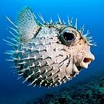 Les animaux marins les plus dangereux poisson cuisine