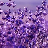 Langage des fleurs engagement