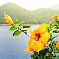 Langage des fleurs plaisirs d'amour
