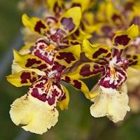 Orchidée 10