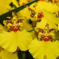 Orchidée 11