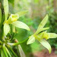 Orchidée 15