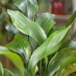 Plante verte 003