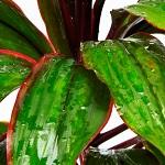 Plante verte 008