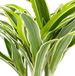 Plante verte 011
