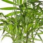 Plante verte 016