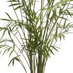 Plante verte 019