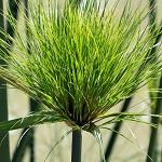 Plante verte 020