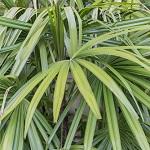 Plante verte 025