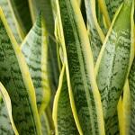 Plante verte 026