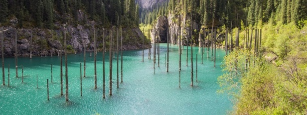 Arbres et forêts insolites du monde 1