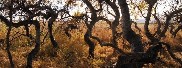 Arbres et forêts insolites du monde 10