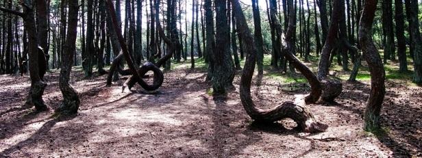 Arbres et forêts insolites du monde 15