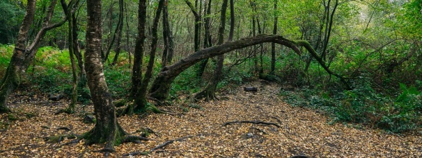 Arbres et forêts insolites du monde 16