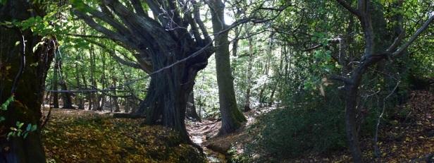 Arbres et forêts insolites du monde 17