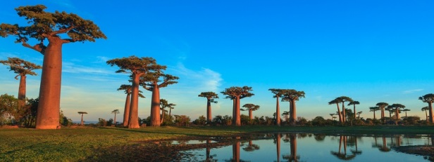Arbres et forêts insolites du monde 2
