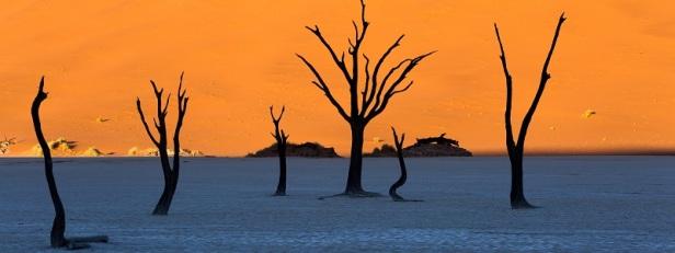 Arbres et forêts insolites du monde 4