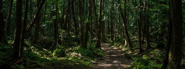 Arbres et forêts insolites du monde 7