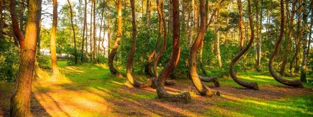 Arbres et forêts insolites du monde 9