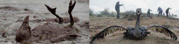 marée noire catastrophe
