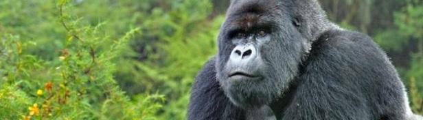 Espèce en danger d'extinction 2.jpg