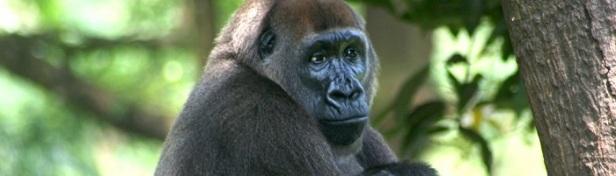 Espèce en danger d'extinction 7