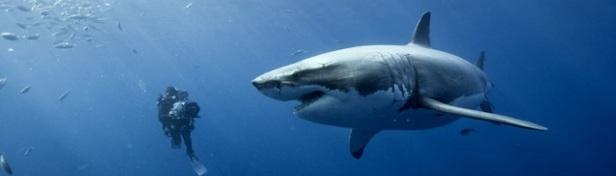 Les requins les plus dangereux du monde 1