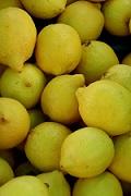 Conseils citronnier