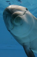 GERMANY-ANIMALS-DOLPHINS-OFFBEAT