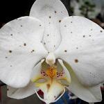 Traitement maladie plante Botrytis