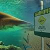 Australie requin