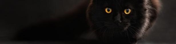 Citation chat noir
