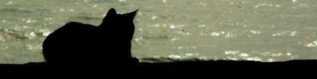 Citations sur le chat