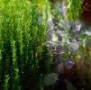 Conseils plantes aromatiques