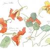 Fleurs caractère