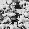 Fleurs infidélité rupture