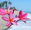 Fleurs mer