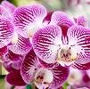 Orchidées conseils