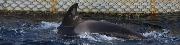 Prison baleine