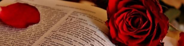 Citations proverbes rose